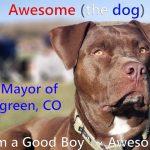 Evergreen Mayor Race Shake Up