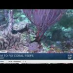 Coral reefs to be fixed in Key West