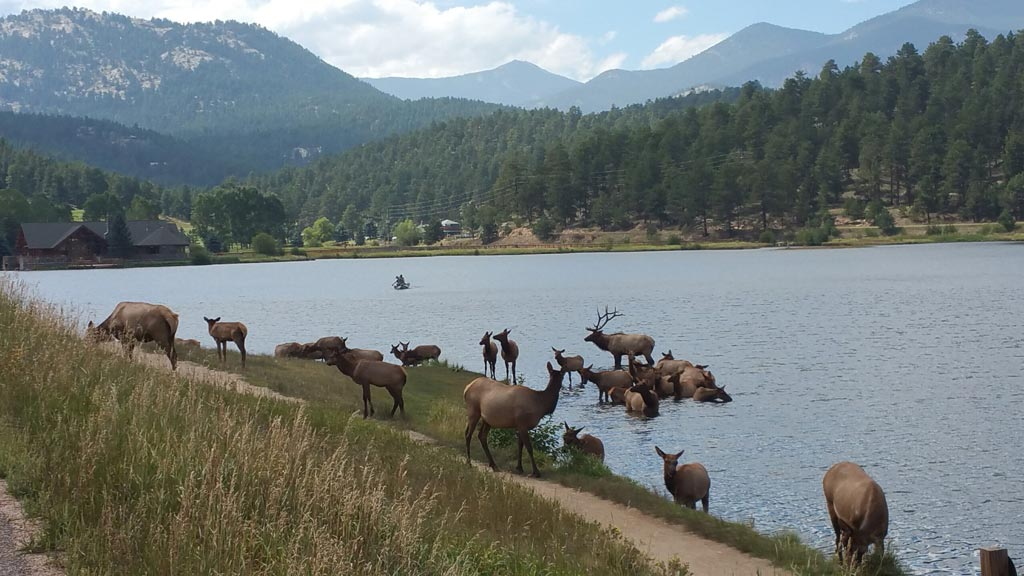 Evergreen-CO-Elk-Evergreen-Lake